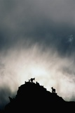 Dall's Sheep on Cliff at Sunset Photographic Print by Paul Souders