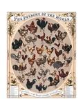 The Poultry of the World Reproduction procédé giclée