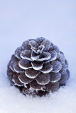 Pine Cone Covered in Snow and Frost, Close Up Photographic Print