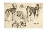 Studies of Hounds Giclee Print by Wenceslas Hollar