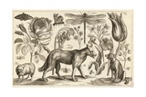 A Wolf, with a Sheep, a Dog and Various Flowers and Insects Impression giclée par Wenceslas Hollar