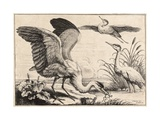 Three Herons Giclee Print by Wenceslas Hollar