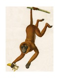 Monkey Hanging from Branch Giclee Print