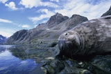 Weddell Seal Resting on Rocks Photographic Print by Paul Souders