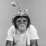 1960s Portrait Monkey Chimpanzee Wearing Stupid Funny Hat with Bow and Flower Photographic Print