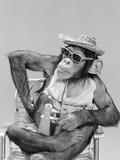 1960s Monkey Chimpanzee Wearing Hat Sunglasses Binoculars Sitting in Beach Chair Fotografisk tryk