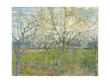 The Pink Orchard Giclee Print by Vincent van Gogh
