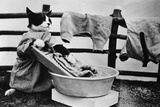 Dressed Up Cat Washing Clothes in Wash Tub Photographic Print