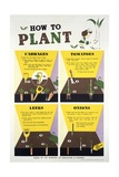 How to Plant Poster Giclee Print