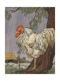 Unhappy Rooster in Rain Impression giclée