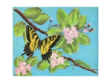Tiger Swallowtail Butterfly and Caterpillar Giclee Print