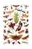 Vintage Illustration of Winged Insects Giclee Print