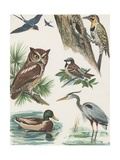 Variety of Birds Giclee Print