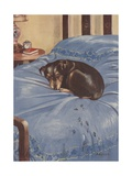 Dog Lying on Bedspead with Muddy Pawprints Giclee Print