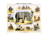 Elephants and their Uses Giclee Print