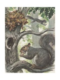 Squirrels in Tree Giclee Print