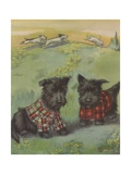 Two Black Scottie Dogs Wearing Plaid Coats in Grassy Field Impression giclée