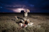 Cheetah and Lightning Storm, Ngorongoro Conservation Area, Tanzania Photographic Print by Paul Souders