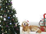 Golden Retriever by Christmas Tree Photographic Print
