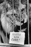 Circus Lion Fotografie-Druck von Mike Moore