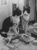 Stage Cat Fotografisk tryk af Godfrey Thurston Hopkins