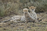 Cheetah Cub and Mother Photographic Print by Paul Souders