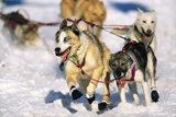 Sled Dogs Racing Through Snow Photographic Print by Paul Souders