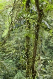Rainforest, Costa Rica Photographic Print by Paul Souders