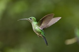 Hummingbird, Costa Rica Photographic Print by Paul Souders