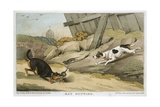 Dogs Rat Hunting Giclee Print
