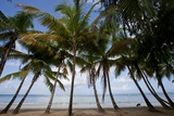 Palm Tree Along Caribbean Beach in Dominican Republic Photographic Print by Paul Souders