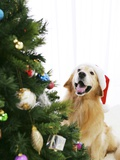 Golden Retriever by Christmas Tree Photographic Print