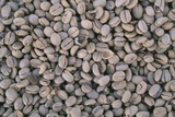 Coffee Beans Drying Photographic Print by Paul Souders
