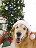Golden Retriever with Santa Hat by Christmas Tree Photographic Print