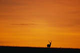 Impala Silhouette at Sunrise Photographic Print by Paul Souders