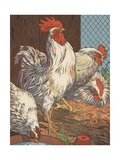 Illustration of Four White Chickens Reproduction procédé giclée