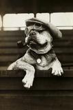 Dog Wearing Hat and Goggles Impressão fotográfica