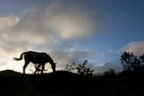 Horse and Arenal Volcano, Costa Rica Photographic Print by Paul Souders
