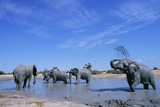 Elephants at Water Hole Fotografie-Druck von Paul Souders