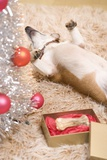 Dog Lying on Rug by Christmas Tree Stampa fotografica