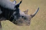 Black Rhinoceros Photographic Print by Paul Souders