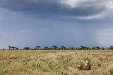 Cheetah and Approaching Storm Photographic Print by Paul Souders