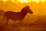 Plains Zebra, Makgadikgadi Pans National Park, Botswana Photographic Print by Paul Souders