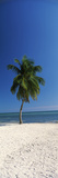 Palm Tree on the Beach, Smathers Beach, Key West, Monroe County, Florida, USA Photographic Print