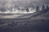 Moody Bison Landscape, Yellowstone Photographic Print by Vincent James
