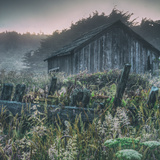 Old Shack at Sea Ranch Photographic Print by Vincent James