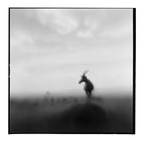 Topi Antelope, Masai Mara Game Reserve, Kenya Fotografisk tryk af Paul Souders