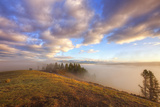 Morning Stroll at Hayden Valley, Yellowstone Photographic Print by Vincent James