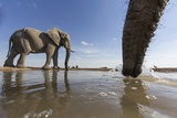 Elephants at Water Hole, Botswana Photographic Print by Paul Souders
