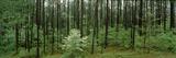 Flowering Dogwood (Cornus Florida) Trees in a Forest, Alabama, USA Fotografie-Druck